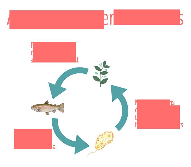 Aquaponic systems for beginners - AquaponicsBuzz