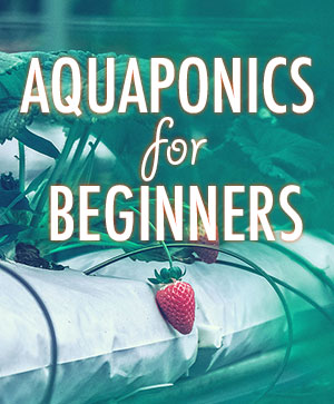 Aquaponic for beginners
