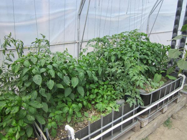 profitable aquaponics growing beds