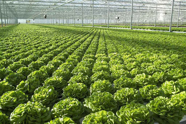 Profitable aquaponics, marketing and costs - AquaponicsBuzz
