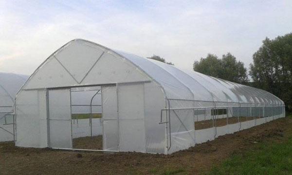 profitable aquaponics plastic greenhouse
