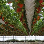 Profitable aquaponics, marketing and costs
