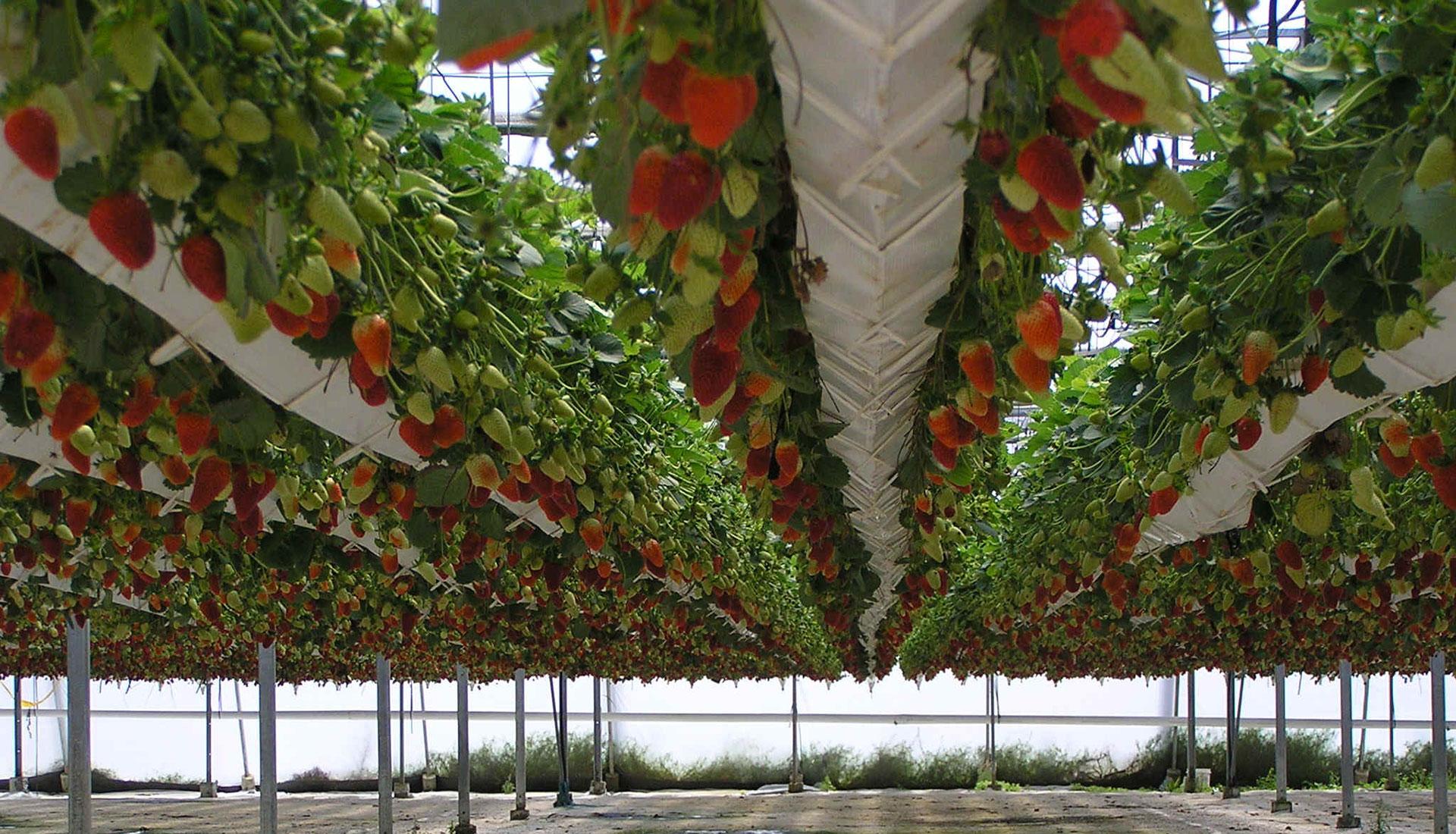 Теплицы: овощеводство и цветоводство, гидропоника и 54
