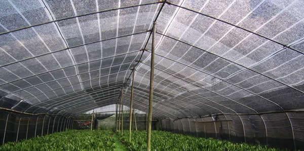 profitable aquaponics shade greenhouse